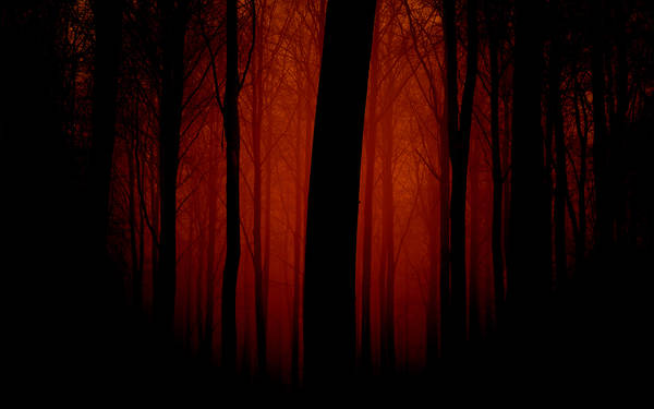 Dark scary forest.