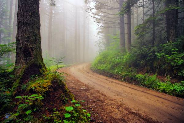 The road in the misty forest.