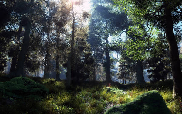 The sun's rays in the thick forest.